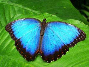 butterfly 142506 1280 300x225 - ユリシスグレイトワースカードのレビューと口コミを買って調査してみた。