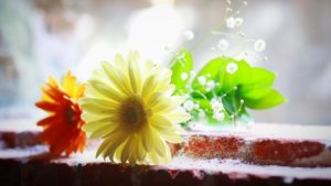waterFlowers 300x169 - 島田秀平さんやゲッターズ飯田さんも語る、2020年のラッキーカラー教えます!